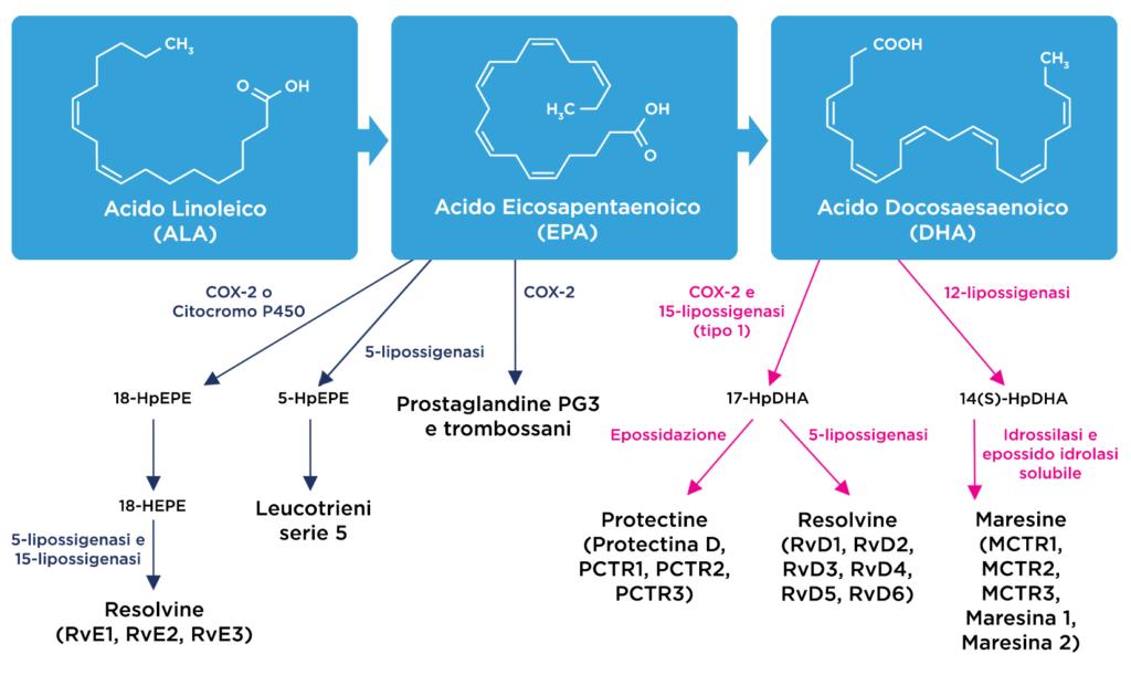 Sintesi Metaboliti derivati da Omega3