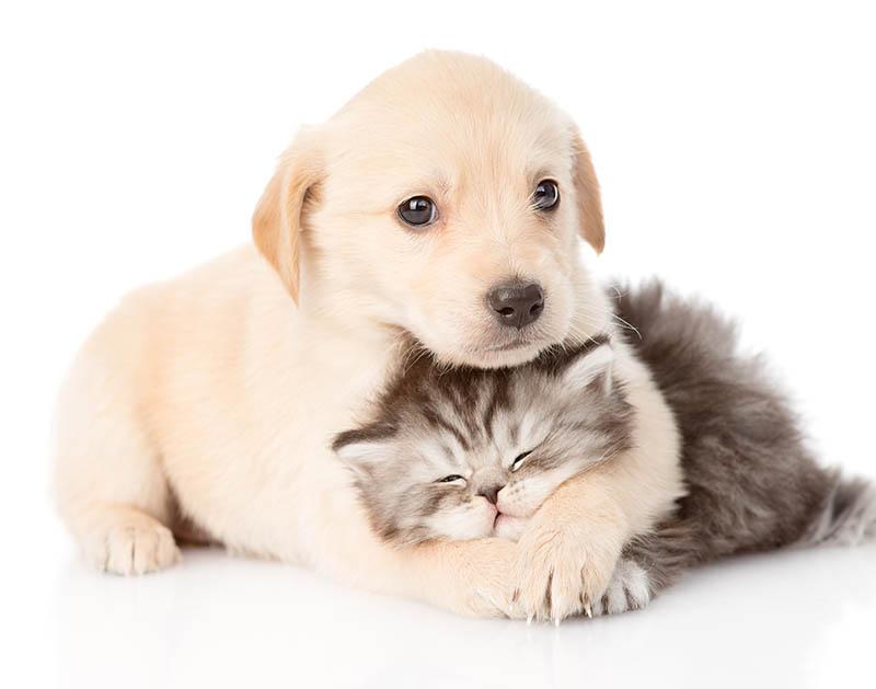 Omega 3 per Cani e Gatti